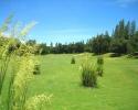 springfield-03